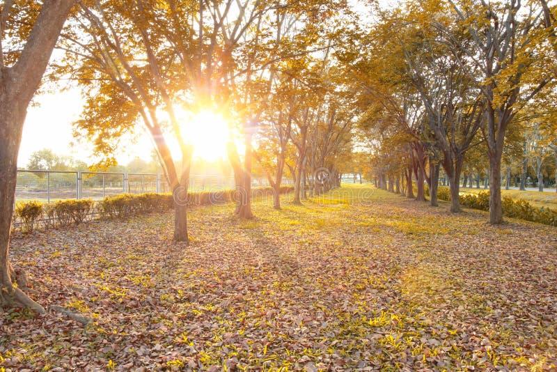 Падение листьев, текстура предпосылки осени стоковая фотография rf