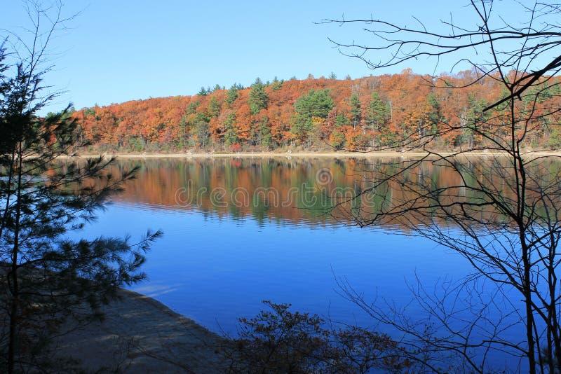 Падение на пруд Walden, согласие, МАМЫ Дубы утра в ноябре стоковое изображение