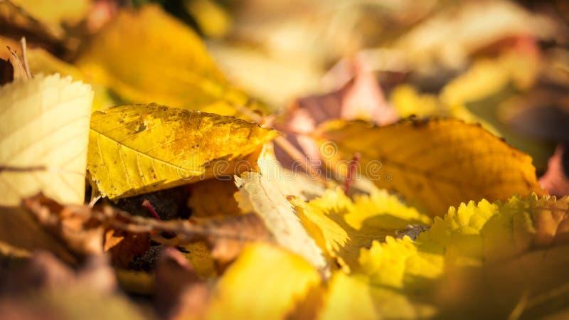 Падение осени выходит на пол древесины леса стоковые изображения rf