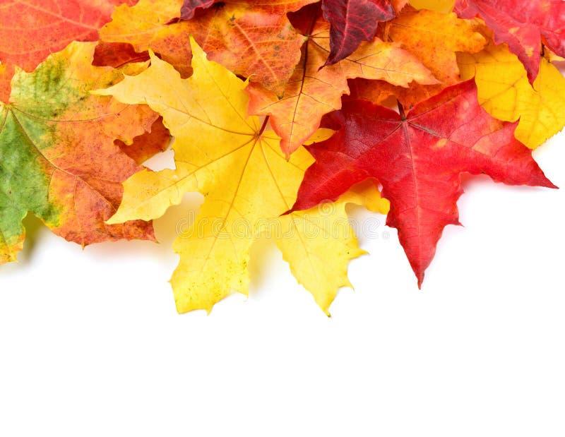падение предпосылки осени изолировало листья белые стоковые изображения