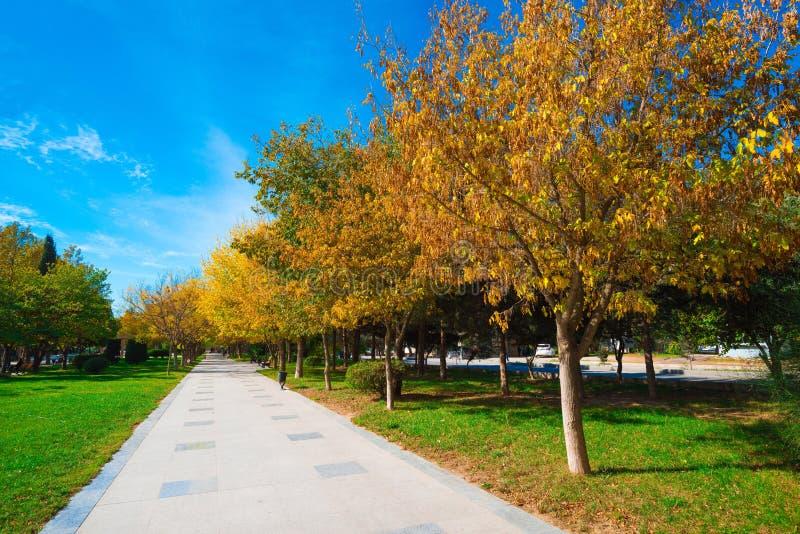 Падение, путь в парке города стоковое фото rf