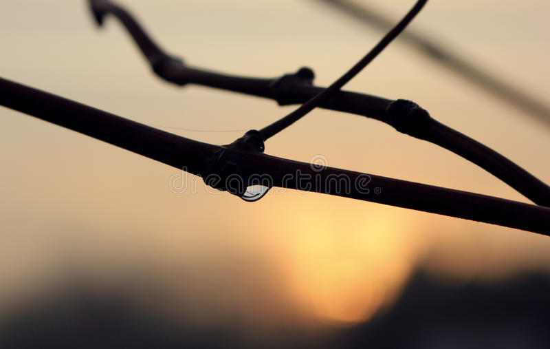 Падение росы утра стоковая фотография rf