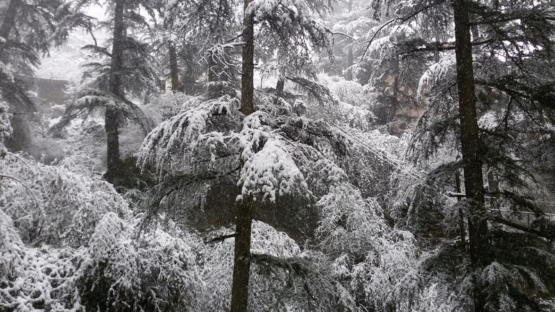 Падение снежка стоковое фото