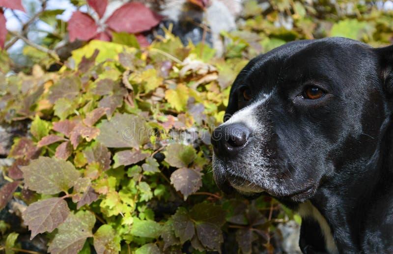 Падение собаки красит предпосылку Outdoors стоковые фотографии rf
