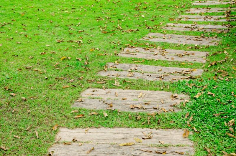 Падение тропы и листьев на зеленый сад стоковое фото rf