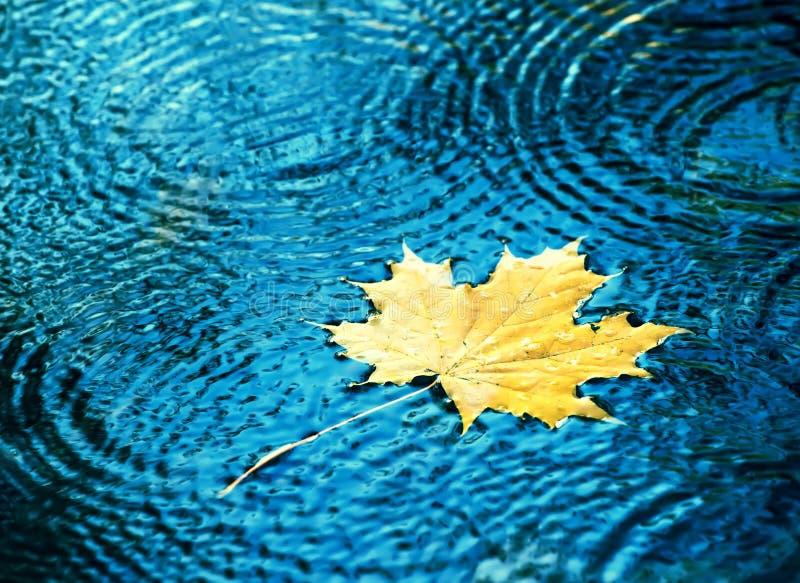 Падения листьев осени в воде стоковое фото