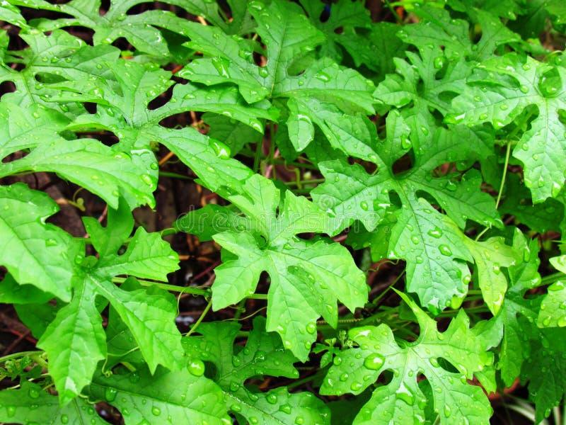 Падения дождя на листьях стоковые изображения