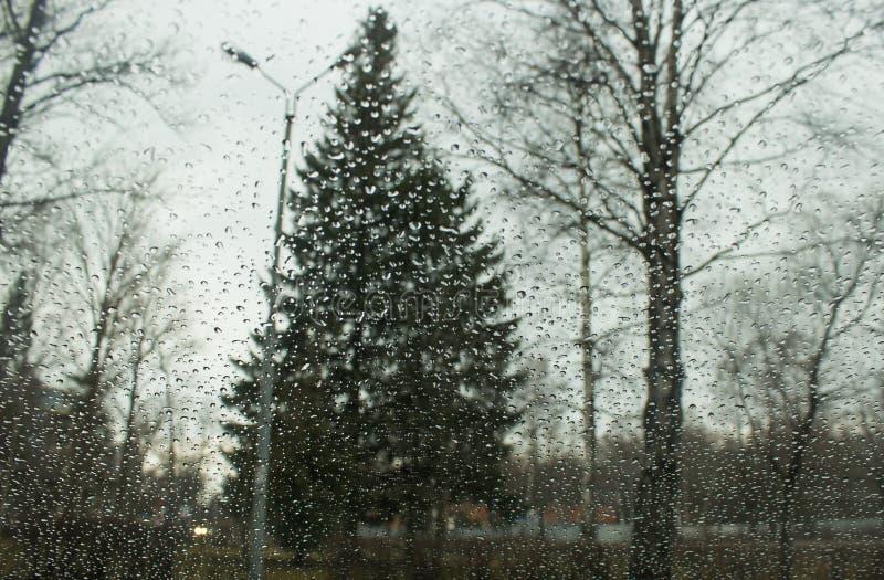 Падения дождя на стекле стоковые изображения