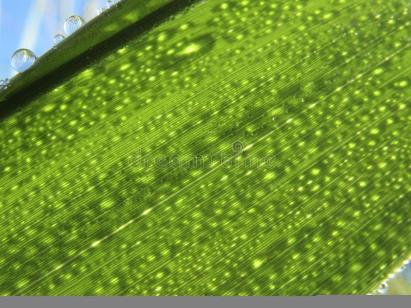 Падения росы утра стоковое фото rf