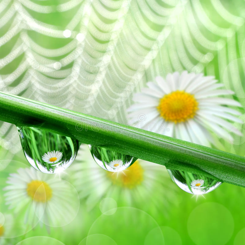 Download Падения росы стоковое фото. изображение насчитывающей природа - 33727880