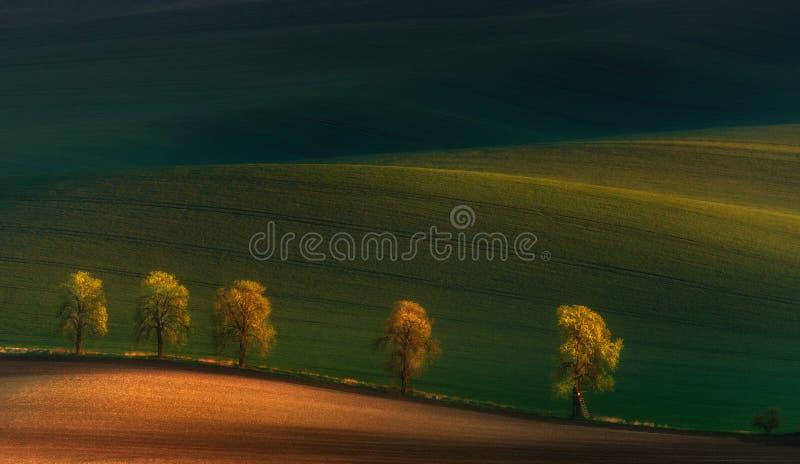 5 паломников Немногословный ландшафт весн-лета с sunlit переулком каштанов, долины с красивыми тенями и поля стоковая фотография rf