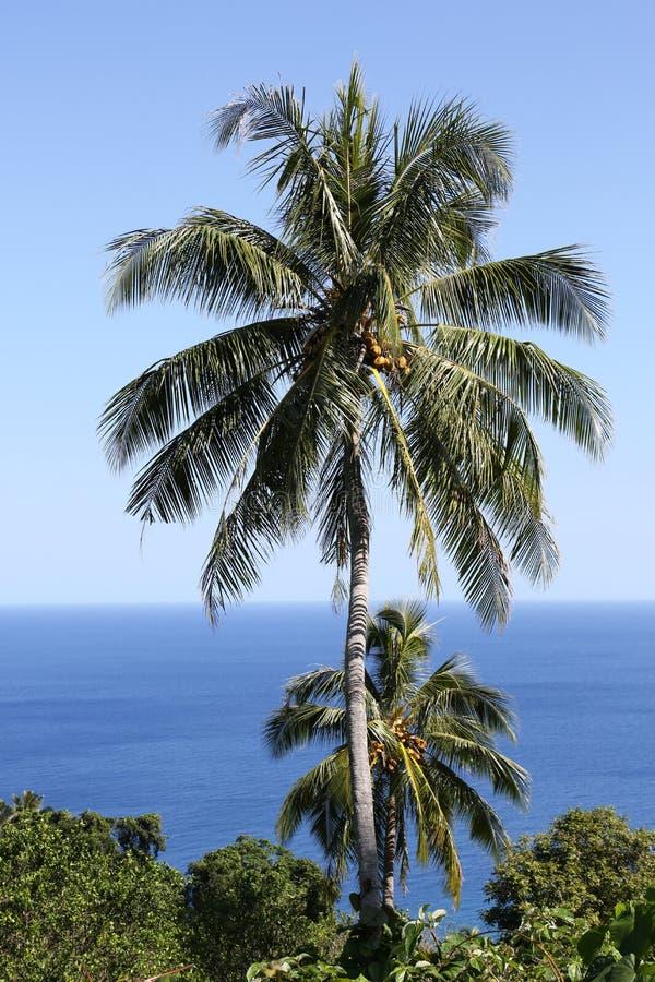 Пальма, Вануату стоковое изображение