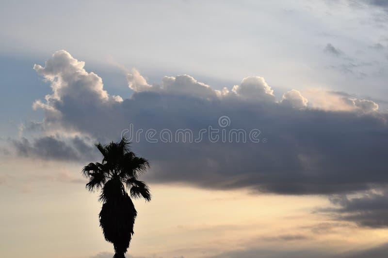 Пальма восхода солнца стоковые фотографии rf