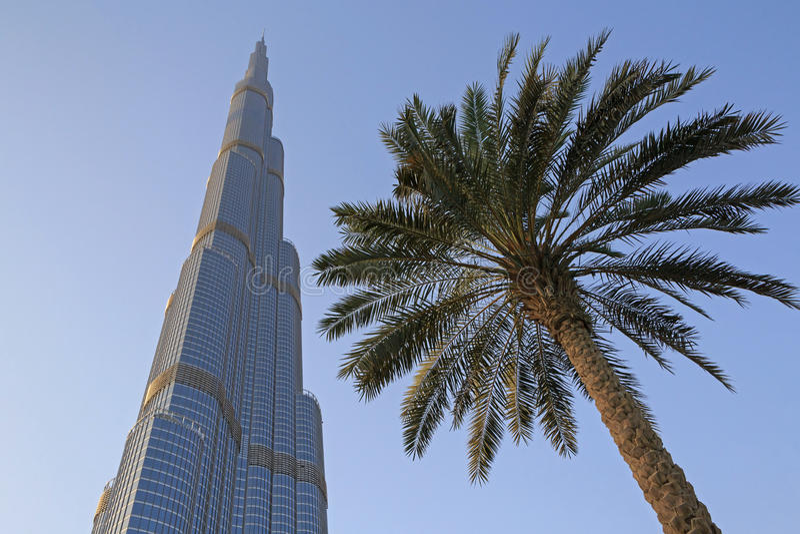 Пальма и небоскреб в Дубай стоковая фотография rf