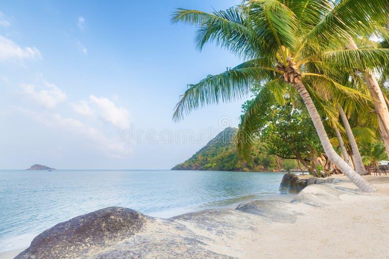 Пальма и пляж на красивом тропическом острове стоковые фото