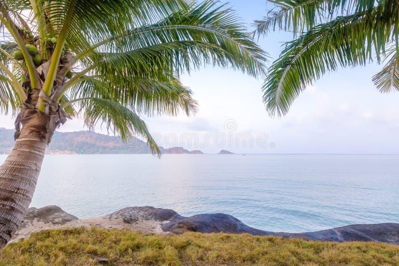 Пальма и пляж на тропическом острове в утре стоковые изображения