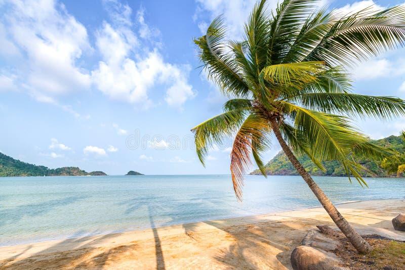 Пальма и пляж на тропическом острове стоковые фотографии rf