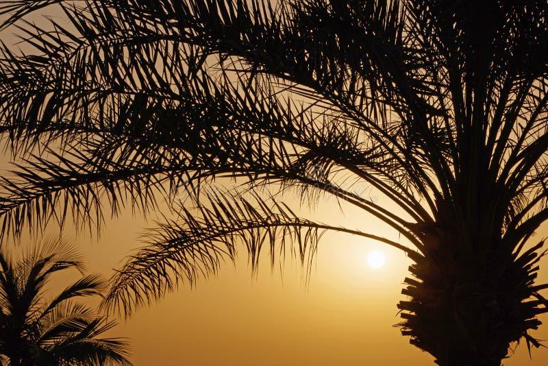 Пальма над восходящим солнцем стоковое изображение rf