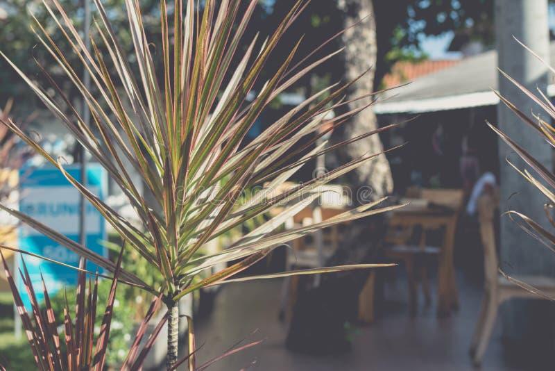 Пальма на запачканной предпосылке тропического кафа на острове Бали, Индонезии стоковое изображение rf
