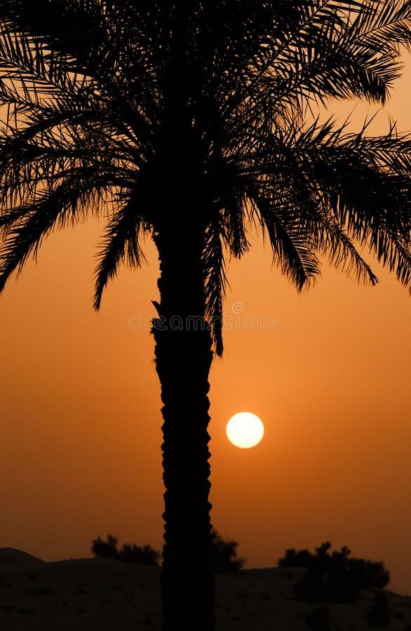 Пальма над заходом солнца стоковое изображение rf
