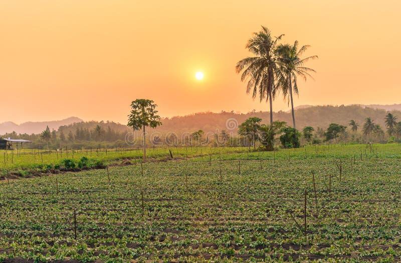 Пальма огорода и кокоса стоковые фотографии rf