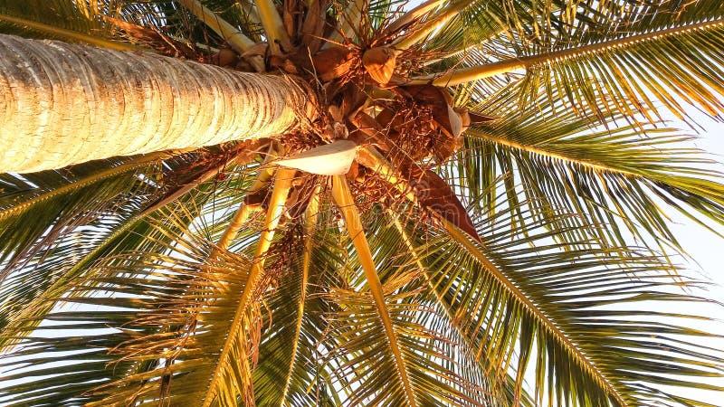 Пальма освещенная восходом солнца стоковая фотография