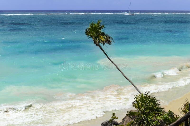 Пальма согнула над голубым морем на пляже, Мексике стоковое изображение rf