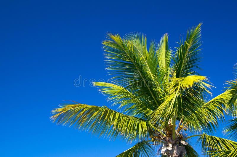 Download Пальма стоковое изображение. изображение насчитывающей джунгли - 33730497