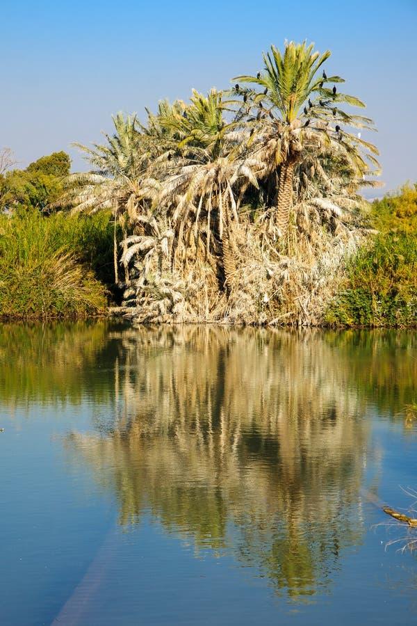 Пальма, En Afek стоковое изображение