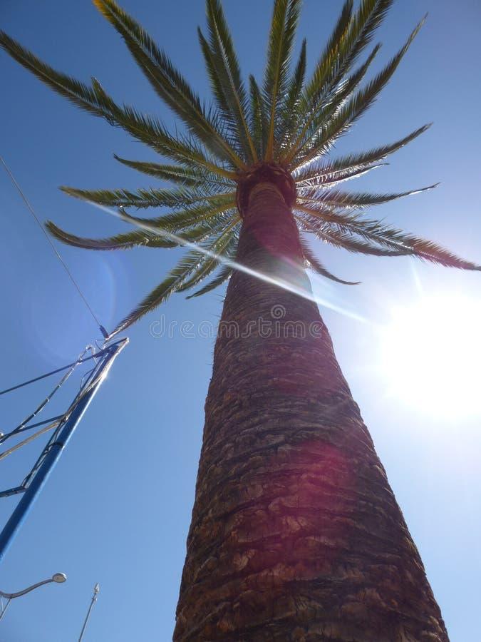 Пальма Ovalle, Чили стоковая фотография rf