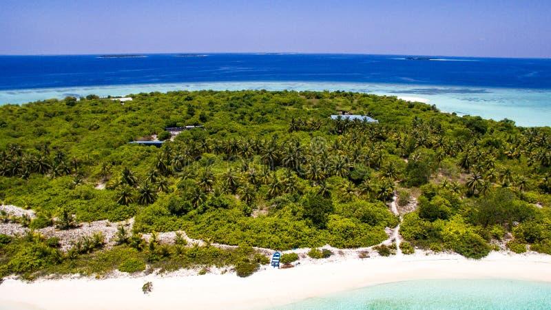 Пальмы в острове стоковая фотография rf