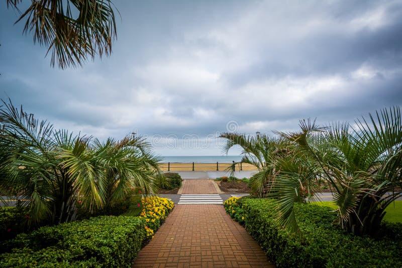 Download Пальмы вдоль дорожки, в Virginia Beach, Вирджиния Стоковое Фото - изображение насчитывающей outdoors, пасмурно: 81800408