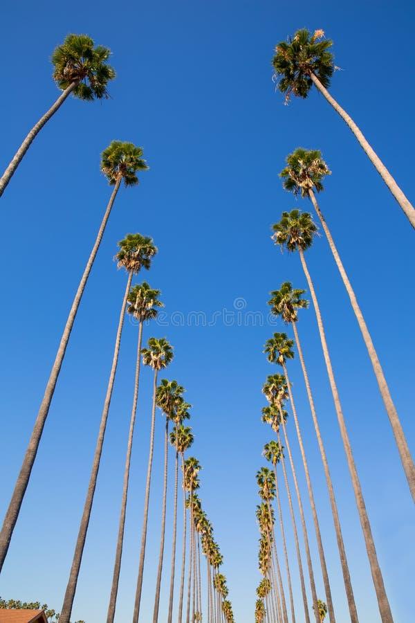 Пальмы в ряд типичная Калифорния Лос-Анджелеса ЛА стоковые фотографии rf