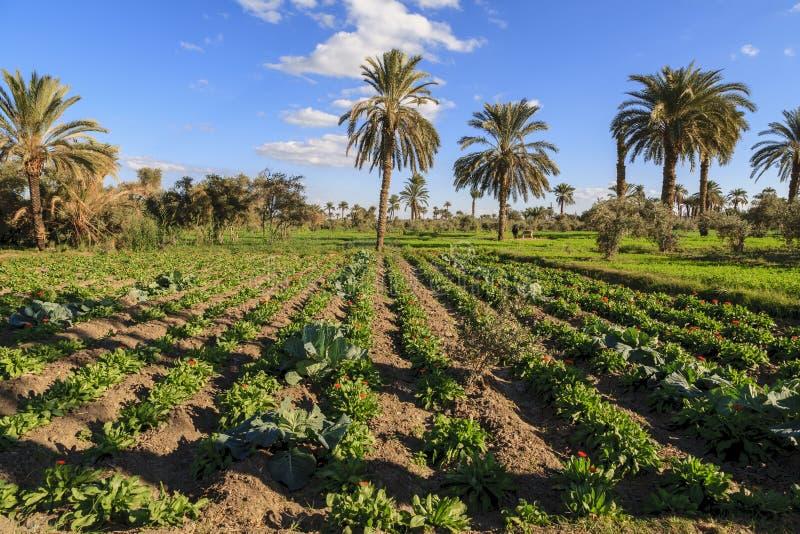Пальмы в ферме стоковое изображение rf