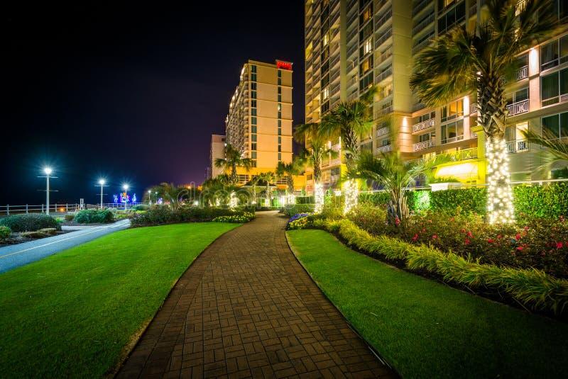 Download Пальмы и гостиницы Highrise вдоль дорожки на ноче, в Virg Редакционное Фотография - изображение насчитывающей bluets, baxter: 81800512