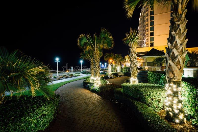 Download Пальмы и гостиницы Highrise вдоль дорожки на ноче, в Virg Редакционное Изображение - изображение насчитывающей зодчества, света: 81800520