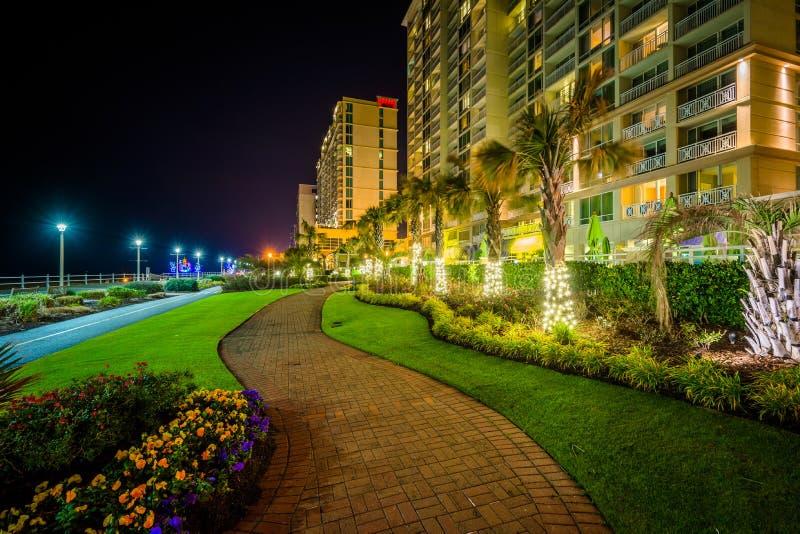Download Пальмы и гостиницы Highrise вдоль дорожки на ноче, в Virg Редакционное Фото - изображение насчитывающей пасмурно, небо: 81800556