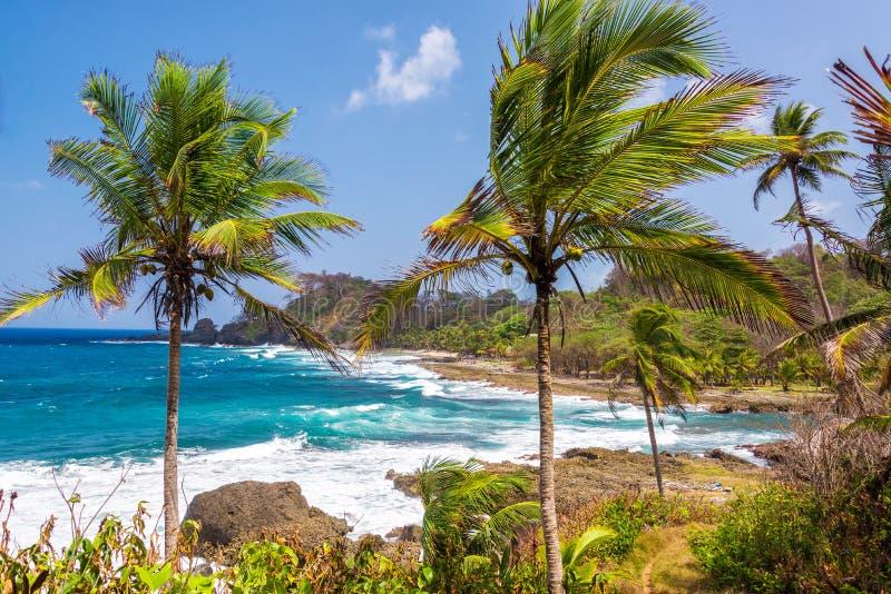 Пальмы и голубое море стоковые изображения rf