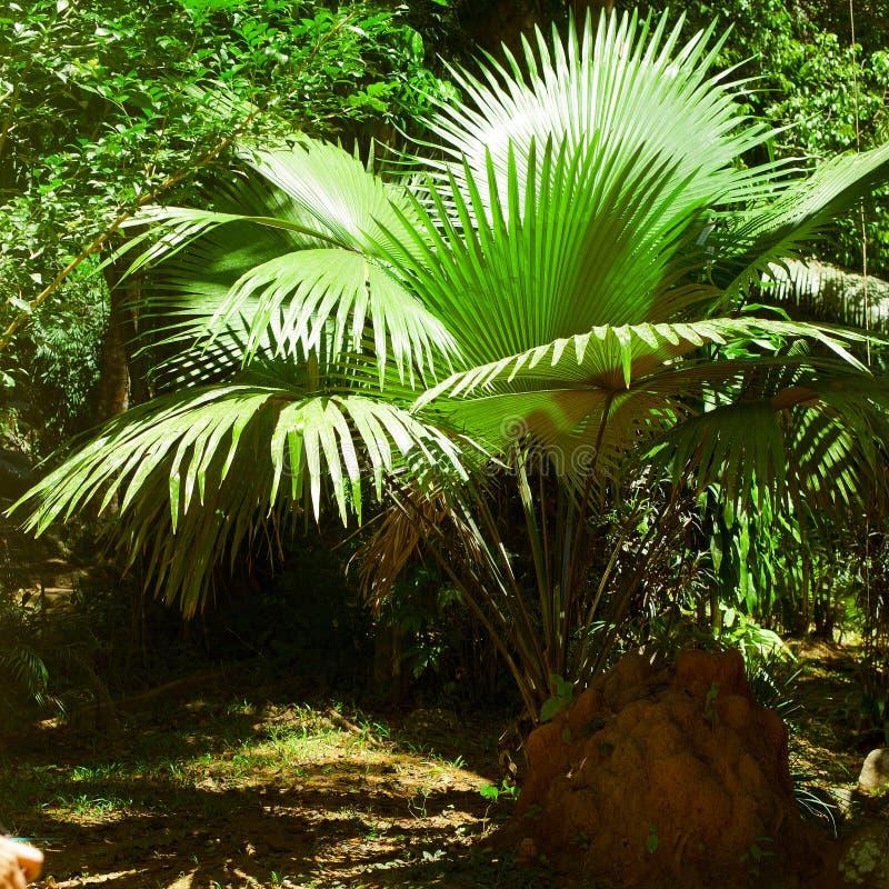 Пальмы и заводы тропического леса на джунглях стоковые фото