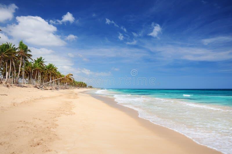 Пальмы и песчаный пляж стоковое фото rf