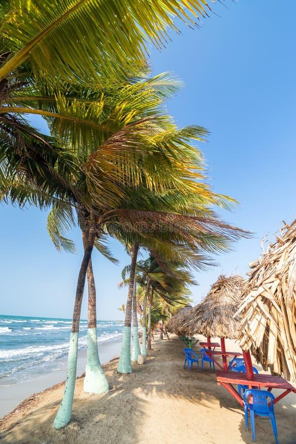 Пальмы и пляж стоковое фото
