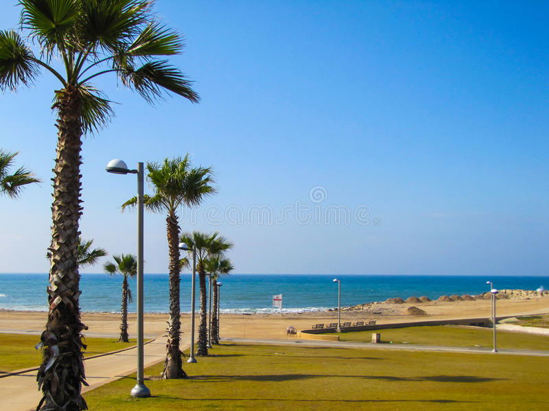 Пальмы и пляж стоковая фотография rf