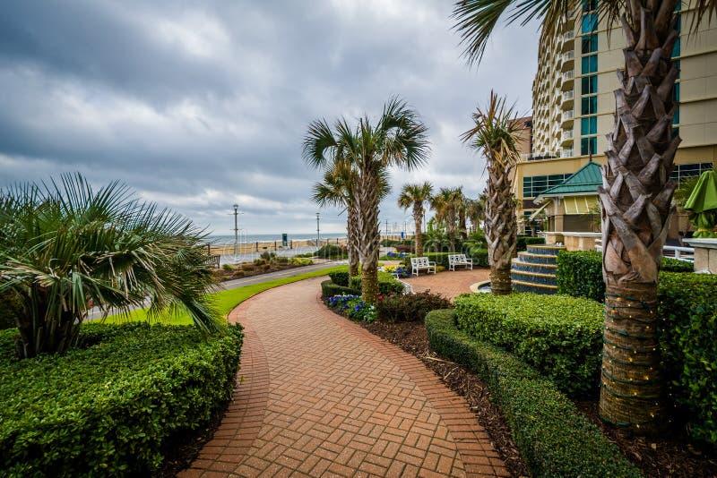 Download Пальмы и сады вдоль дорожки в Virginia Beach, девственнице Редакционное Фото - изображение насчитывающей берег, сценарно: 81800441