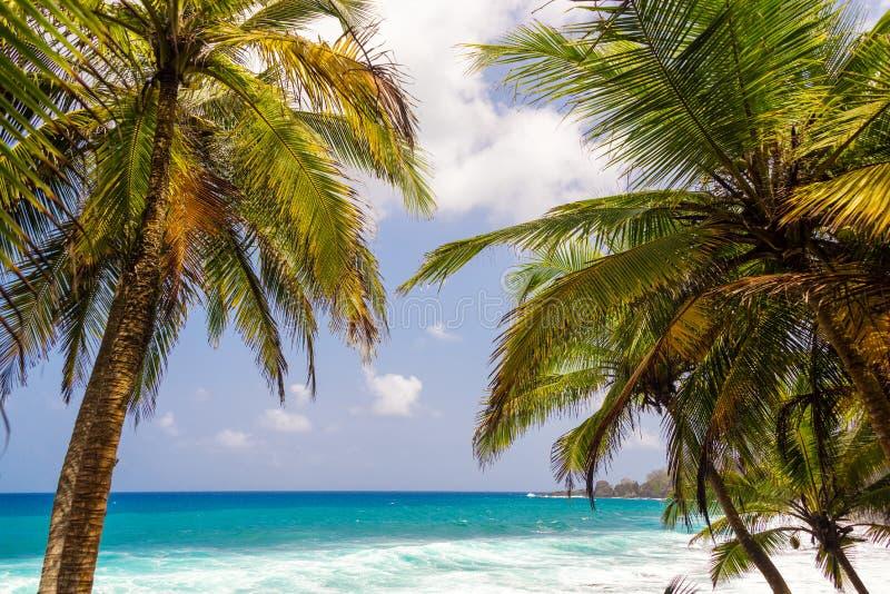 Пальмы и Seascape стоковая фотография rf
