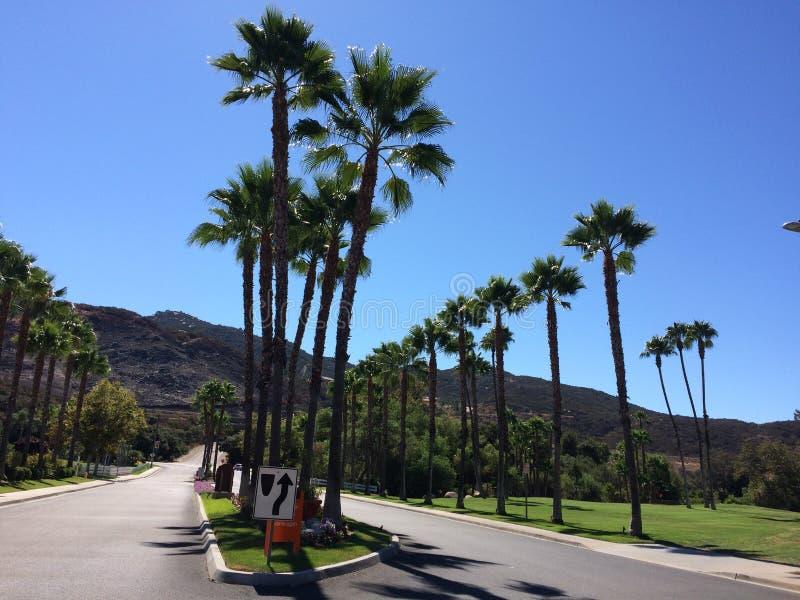 Пальмы Калифорнии стоковые изображения