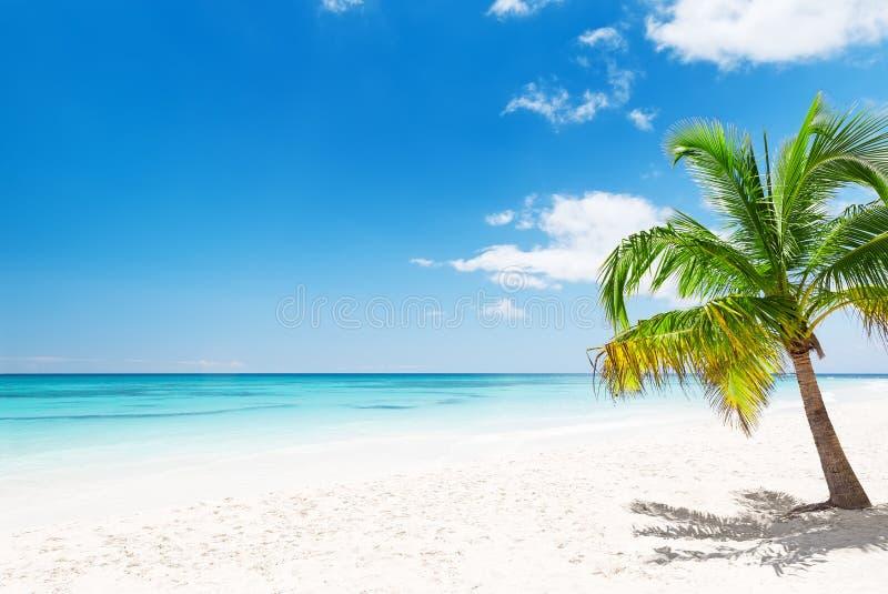 Пальмы кокоса на белом песчаном пляже в Punta Cana, доминиканском стоковое фото rf