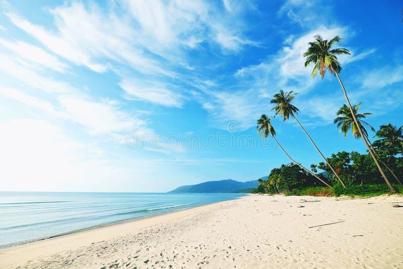 Пальмы кокоса на белом песчаном пляже стоковые изображения