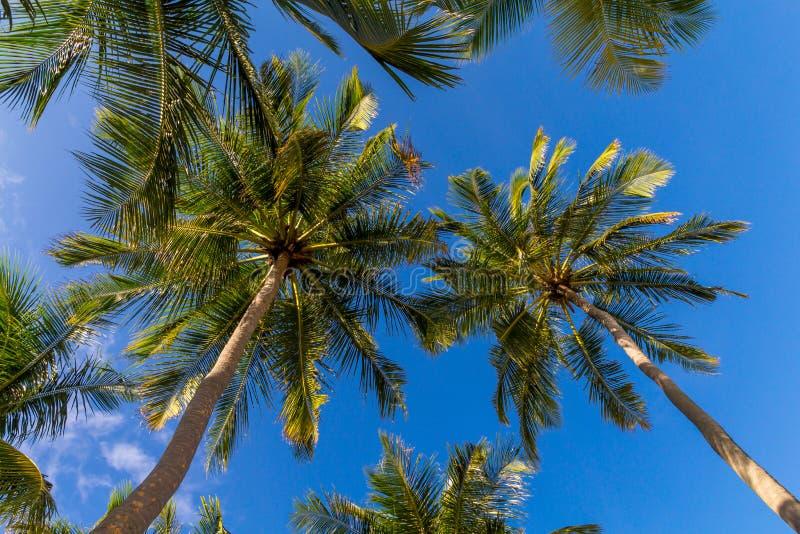 Пальмы кокоса на Мальдивах перед небом стоковая фотография