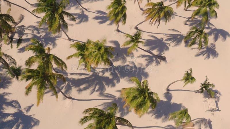 Пальмы на взгляде пляжа сверху стоковая фотография rf