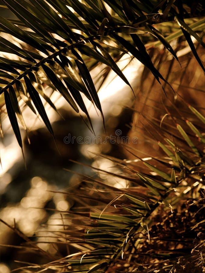 Пальмы над океаном на заходе солнца стоковые фото